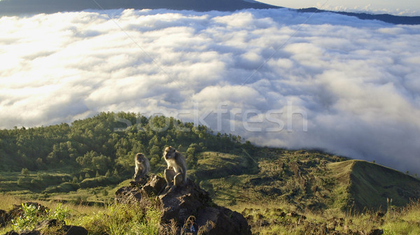 wildlife on mount batur bali Stock photo © zkruger