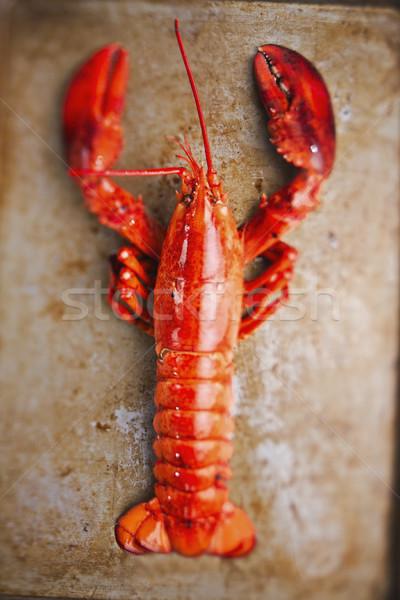 Rústico cocido langosta rojo Blur Foto stock © zkruger