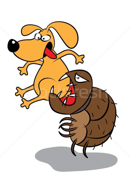 Díszállat kutya támadás aranyos Stock fotó © zkruger
