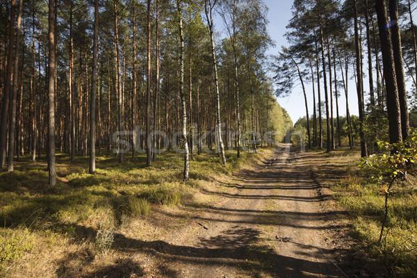 Forestales otono textura hermosa paisaje árbol Foto stock © zolnierek