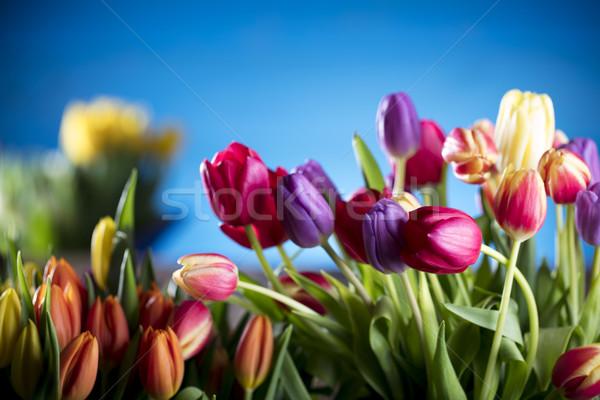 Zdjęcia stock: Wiosną · kwiaty · bukiet · tulipany · kolorowy · bokeh