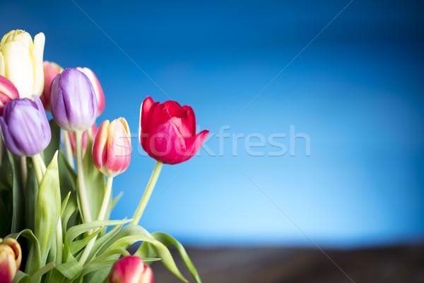 Wiosną kwiaty bukiet tulipany kolorowy bokeh Zdjęcia stock © zolnierek