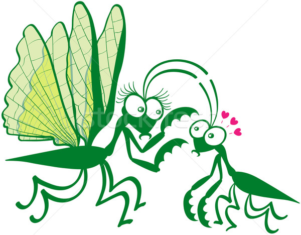 Stock photo: A couple of praying mantises dangerously falling in love