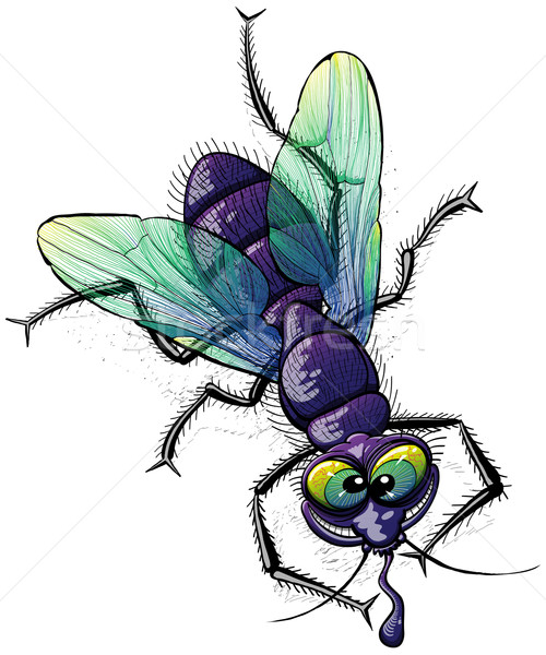 Ugly mad fly making fun of you Stock photo © zooco