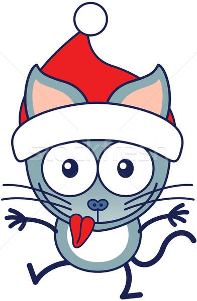 Aranyos macska visel mikulás kalap ünnepel Stock fotó © zooco