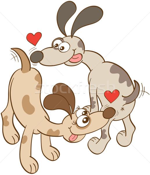 Honden liefde enthousiast ogen groot lang Stockfoto © zooco