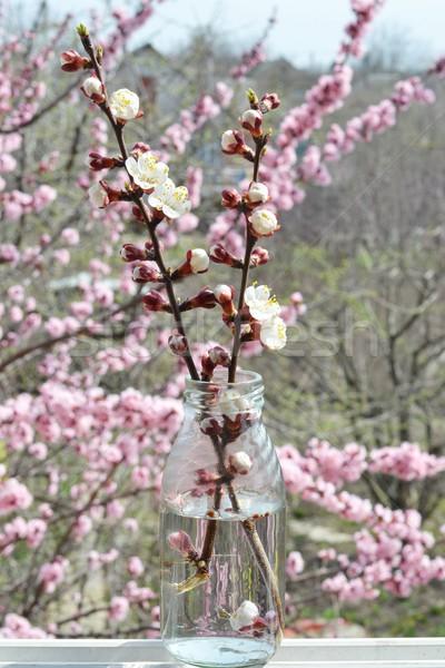 Abricot arbre printemps ciel fleur nature Photo stock © zoryanchik