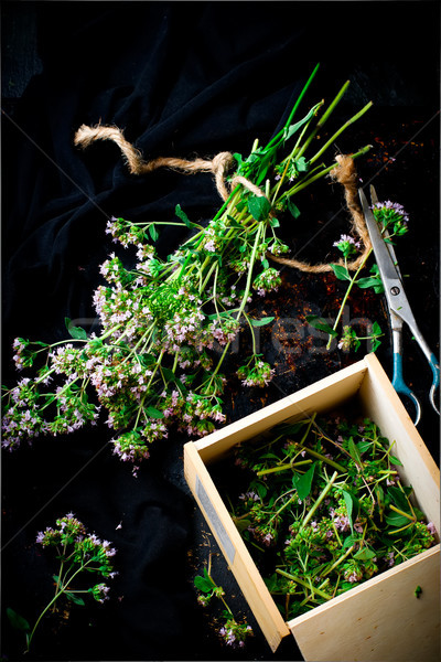 Fraîches origan sombre mise au point sélective feuille santé Photo stock © zoryanchik
