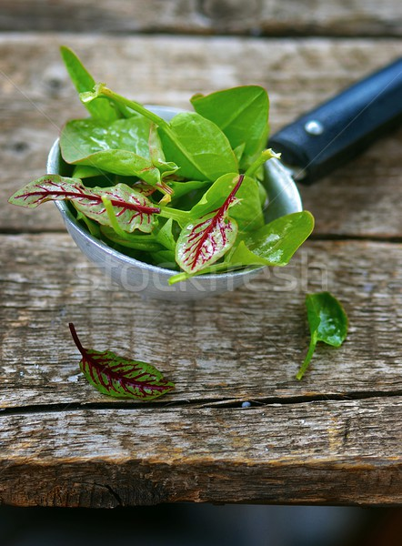 fresh and organic sorrel leaves Stock photo © zoryanchik