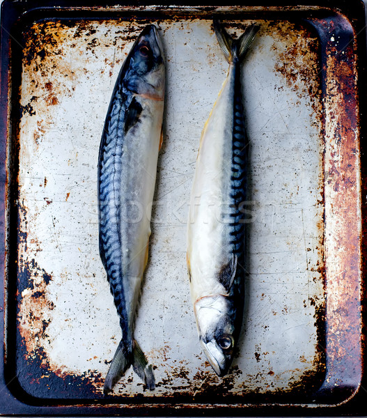 crude mackerel  Stock photo © zoryanchik