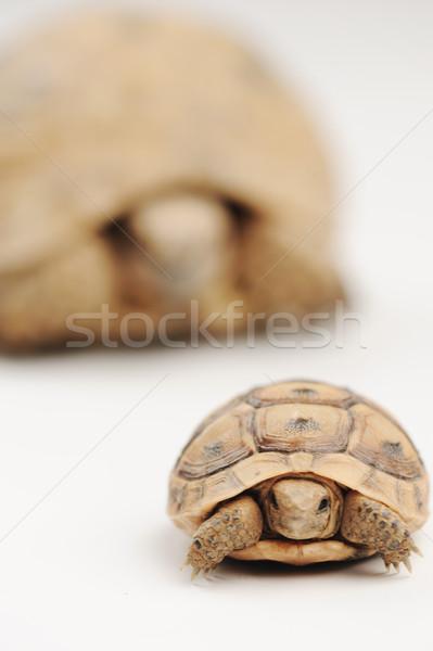 Teknős fiú apa szem természet gyermek Stock fotó © zurijeta