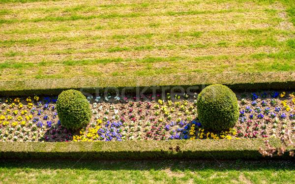 Schludny ogród kwiaty kwiat trawy Zdjęcia stock © zurijeta
