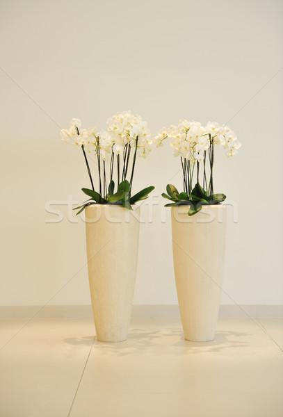 Flowers in vase Stock photo © zurijeta