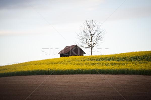 Mooie velden klein huisje huis boom Stockfoto © zurijeta