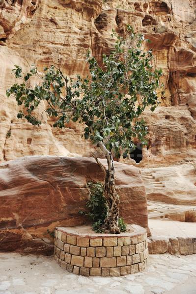The Siq - ancient canyon in Petra, Jordan Stock photo © zurijeta