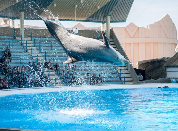 Stock fotó: Delfinek · játszik · víz · kék · ugrás · jókedv