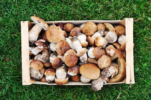 自然 森林 蘑菇 框 草 食品 商業照片 © zurijeta