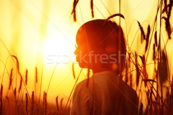 Stock photo: Boy on a wheat field at sunset