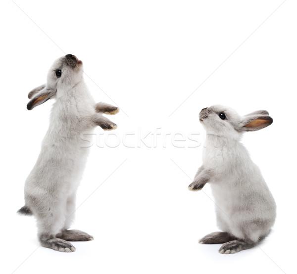 Little rabbit on white Stock photo © zurijeta