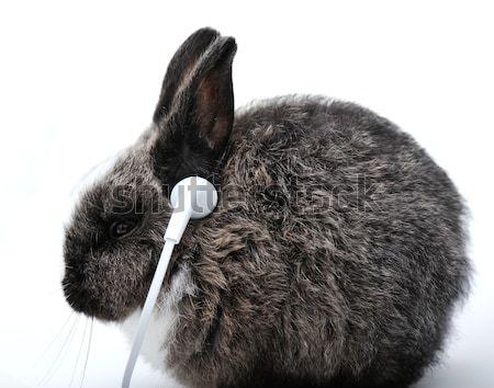 ウサギ 白 小さな 音楽を聴く ヘッドホン ストックフォト © zurijeta