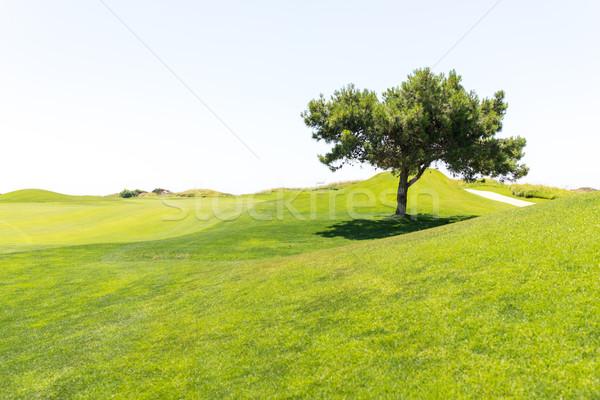 Ağaç güzel çim alanı gökyüzü bahar çim Stok fotoğraf © zurijeta