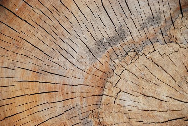 Interessante forma padrão madeira floresta Foto stock © zurijeta