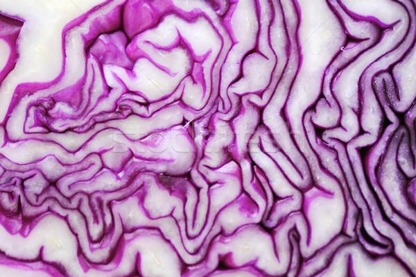 Cabbage vegetable background, closeup Stock photo © zurijeta