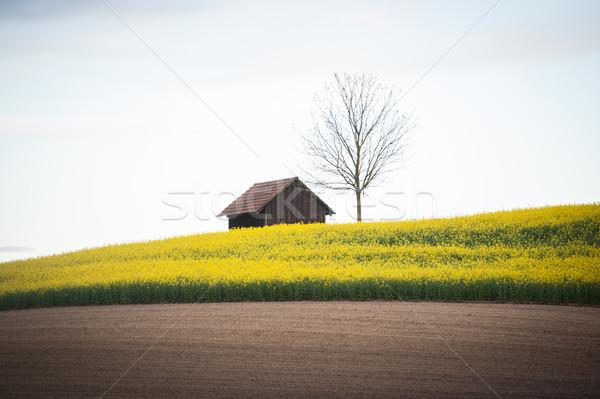 Stock fotó: Gyönyörű · mezők · kicsi · kunyhó · ház · fa