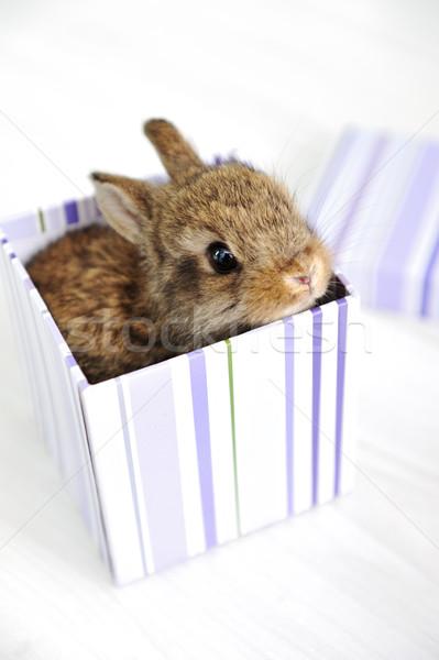 Rabbit cute baby as surprise in box Stock photo © zurijeta