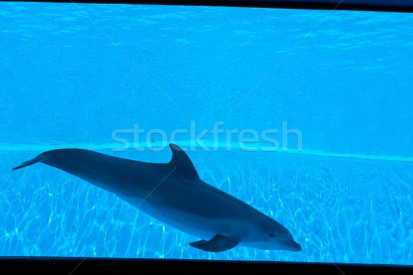 Dolfijnen spelen water Blauw springen leuk Stockfoto © zurijeta
