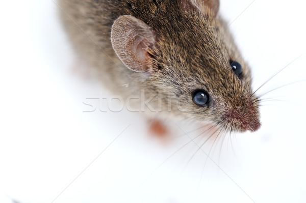 Mouse isolato bianco occhi faccia medicina Foto d'archivio © zurijeta