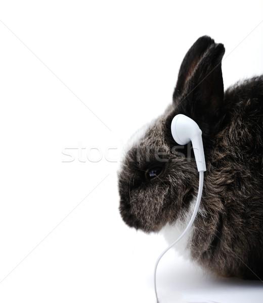 Küçük tavşan beyaz genç kulaklık Stok fotoğraf © zurijeta