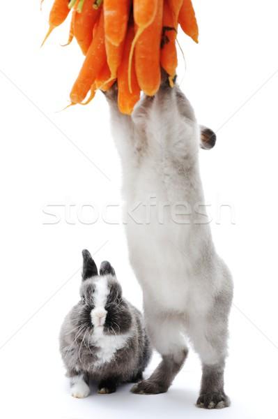 Mały królik biały Wielkanoc rodziny wiosną Zdjęcia stock © zurijeta