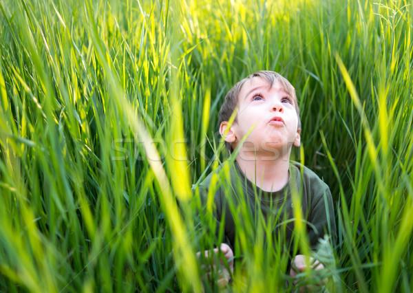 Happy cute little boy sitting in grass Stock photo © zurijeta