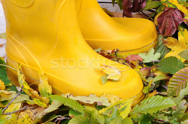 Two legs with boots standing on fall ground  Stock photo © zurijeta