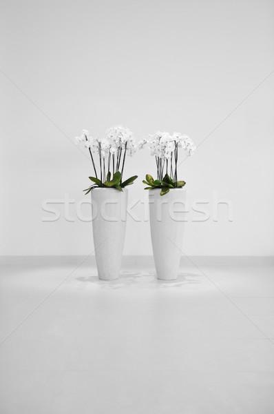 Flowers in vase, minimalistic decoration Stock photo © zurijeta