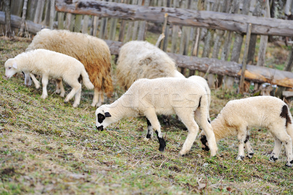 Frazione primavera alimentare gruppo divertente animale Foto d'archivio © zurijeta