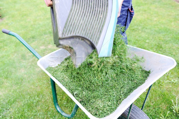 Tuinieren seizoen groene gazon kruiwagen groen gras Stockfoto © zurijeta
