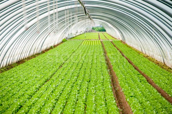 Invernadero planta eco negocios naturaleza jardín Foto stock © zurijeta