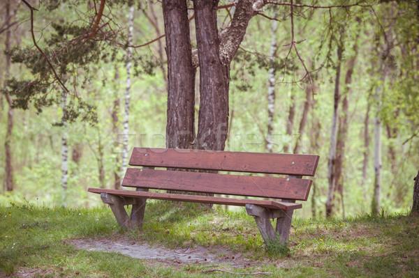 Zdjęcia stock: ławce · lata · lasu · drzewo · słońce