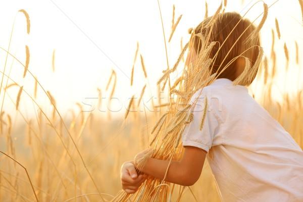Feliz nino cosecha campo nino campo de trigo Foto stock © zurijeta