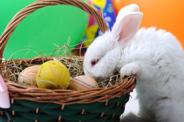 Fehér gyönyörű nyúl húsvéti nyuszi tojások kosár Stock fotó © zurijeta