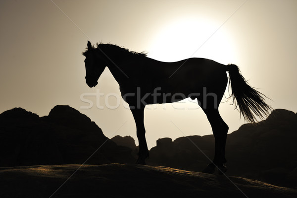 Beautiful silhouette of the horse in sunset Stock photo © zurijeta