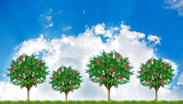 Elma ağaçlar gökyüzü arkasında ağaç bahar Stok fotoğraf © zurijeta