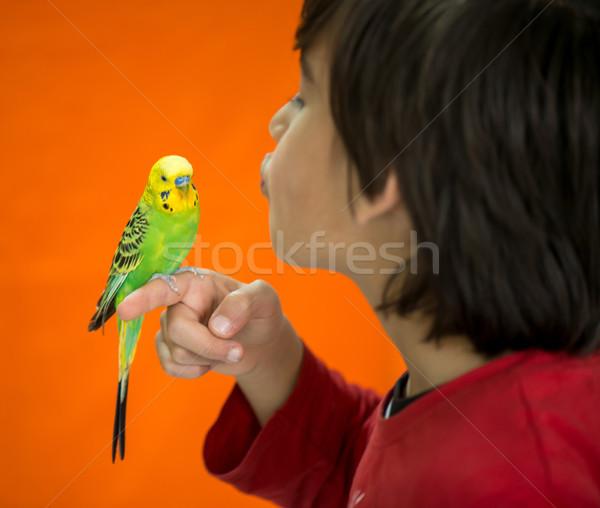 Kid играет ПЭТ Parrot птица синий Сток-фото © zurijeta