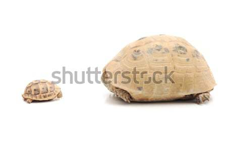Big and small Stock photo © zurijeta