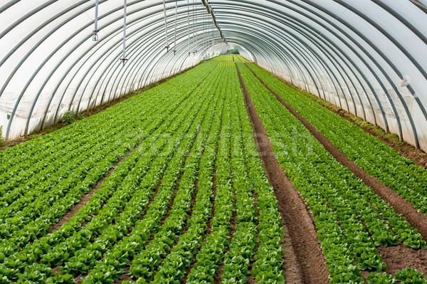 Szklarnia roślin eco działalności charakter ogród Zdjęcia stock © zurijeta