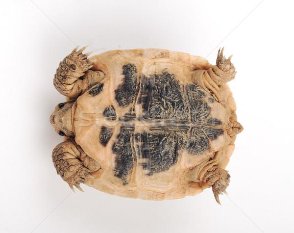 черепахи позируют глаза природы красоту животного Сток-фото © zurijeta