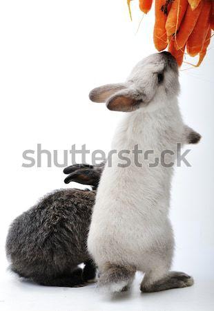 Küçük tavşan beyaz tavşan tavşanlar Paskalya Stok fotoğraf © zurijeta