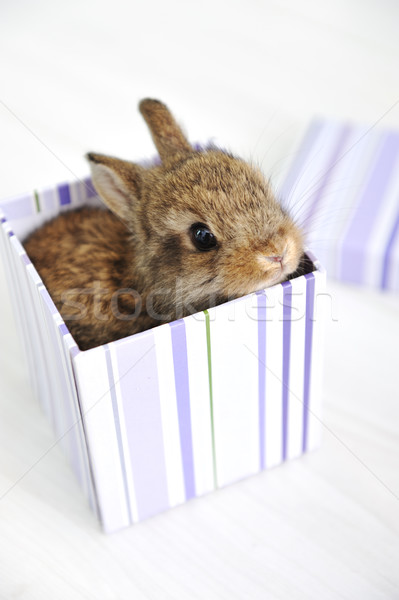 Rabbit cute baby as surprise in box Stock photo © zurijeta